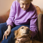 Tips for Keeping Pets Safe when Relying on Home Care Services